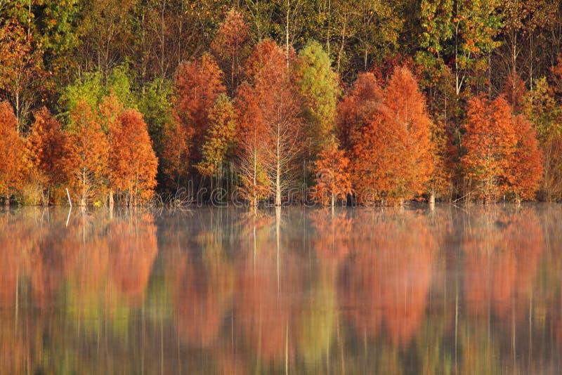 Daling - Kleurrijke Bezinningen in NC royalty-vrije stock afbeeldingen