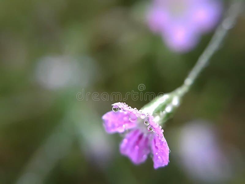 Daling op bloemen royalty-vrije stock fotografie