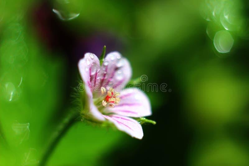 Daling op een bloem royalty-vrije stock afbeeldingen