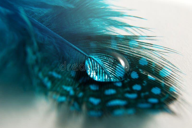 Daling van dauw op een blauwe vogel` s veer stock afbeelding