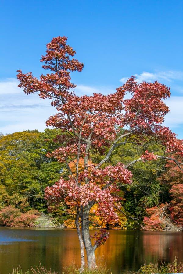 Daling van de bomen van New England in volledige kleur stock foto
