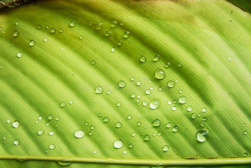 Daling van het blad de natte water stock fotografie