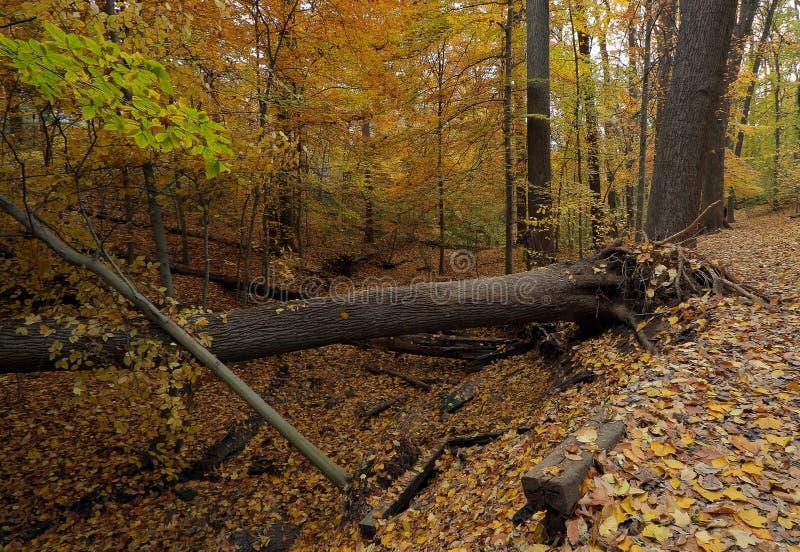 Daling van Washington DC, het park van de Kreek van de Rots royalty-vrije stock afbeelding