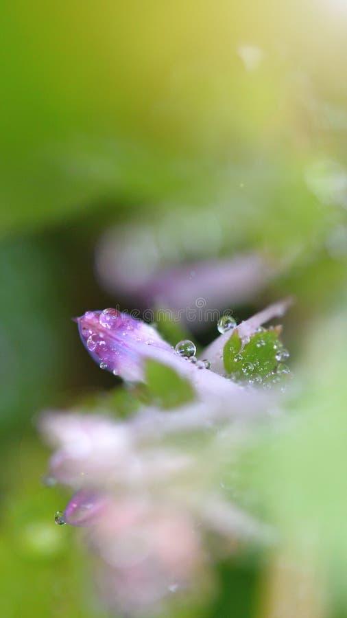 dalingen in de lente stock afbeeldingen