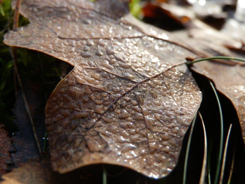 Dalingen op de bladeren royalty-vrije stock afbeelding