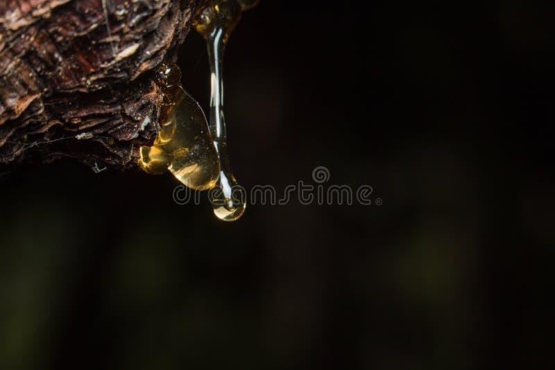 dalingen van amberhoogtestroom neer op boom stock foto