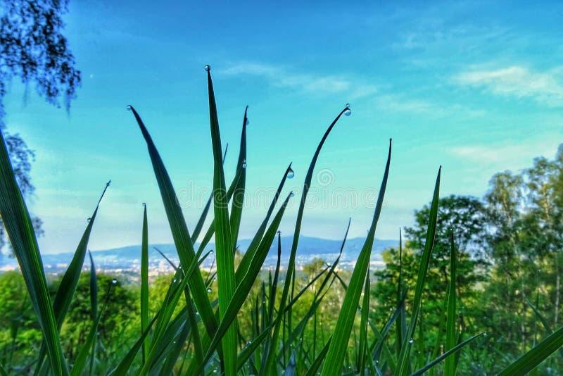 Dalingen van dauw op het gras één ochtend royalty-vrije stock afbeelding