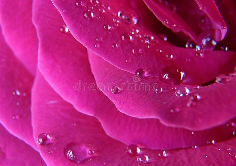 Dalingen van het water op roze namen toe stock foto's