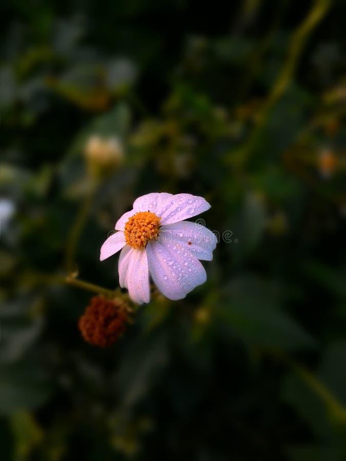 dalingen van water op bloem stock foto