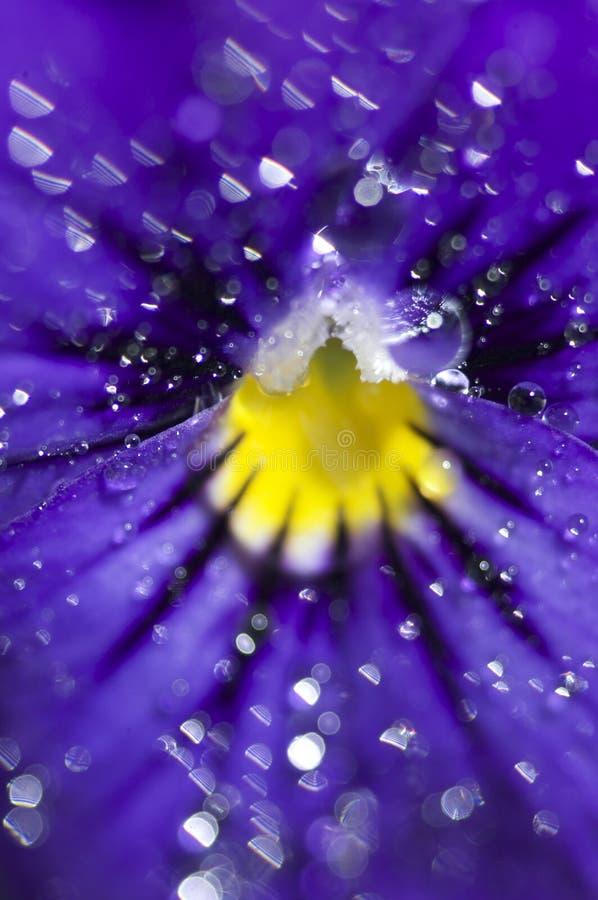Dalingen van water op bloem stock foto's