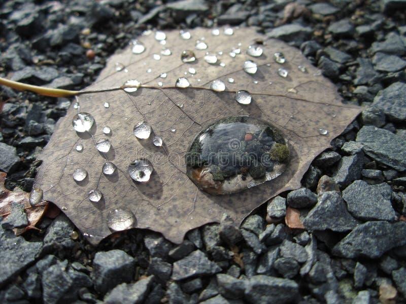 Dalingen van water op een blad stock afbeelding
