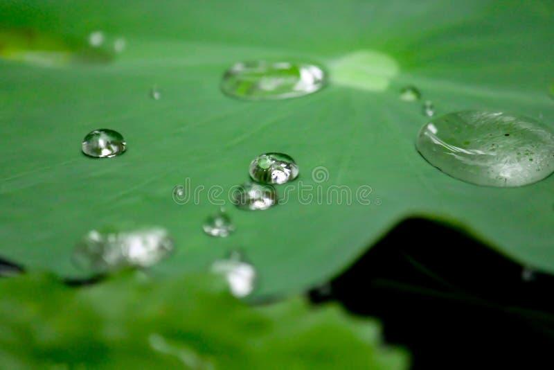 Dalingen van water op een lotusbloemblad stock afbeelding