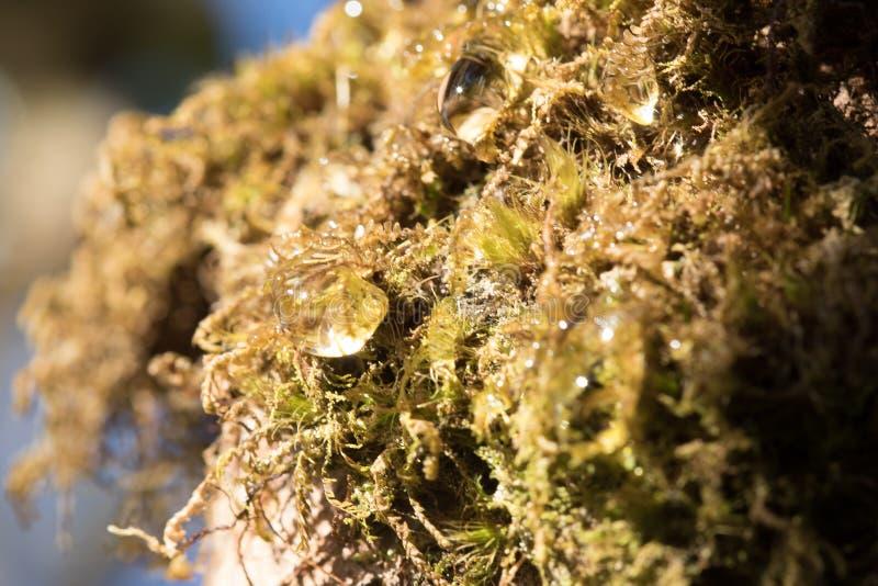 Dalingen van water op mossen in aard stock foto's