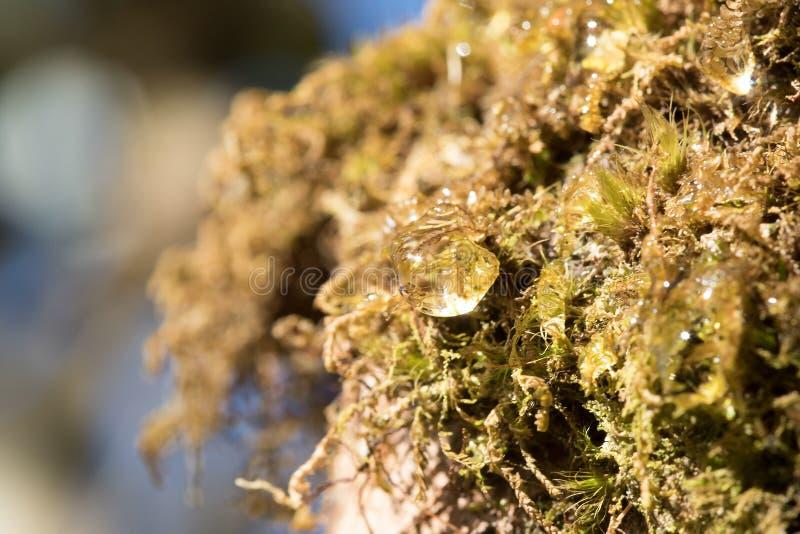 Dalingen van water op mossen in aard royalty-vrije stock foto
