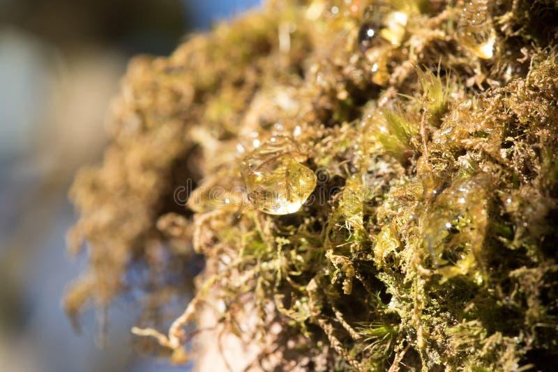 Dalingen van water op mossen in aard royalty-vrije stock afbeeldingen
