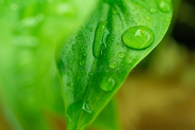 Dalingenwater op Groene Bladerenachtergrond royalty-vrije stock foto's