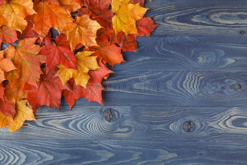 Dalings achtergrondkader met esdoornbladeren op blauw royalty-vrije stock foto's
