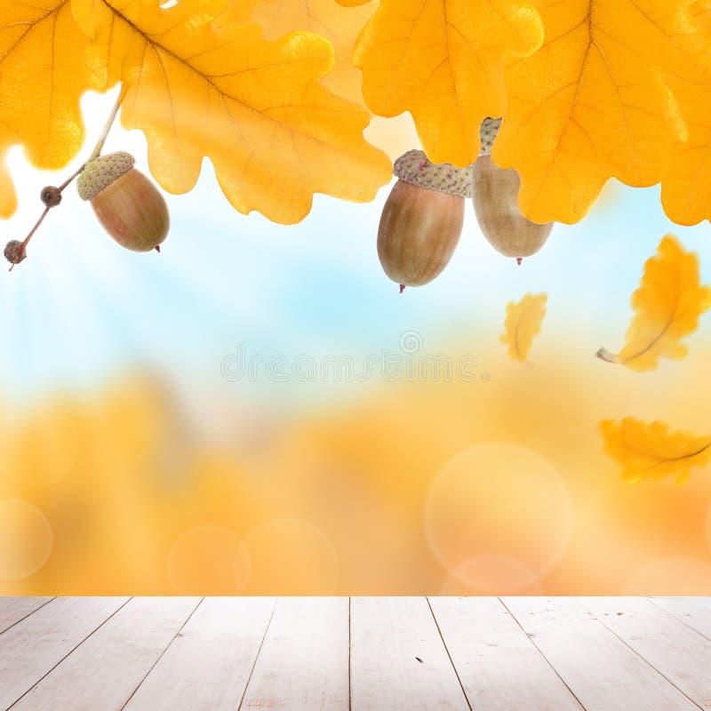 Dalingsachtergrond met Autumn Yellow Oak Leaves stock foto