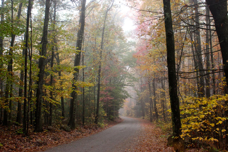 Dalingsbladeren in een bos onderaan een landweg stock foto's