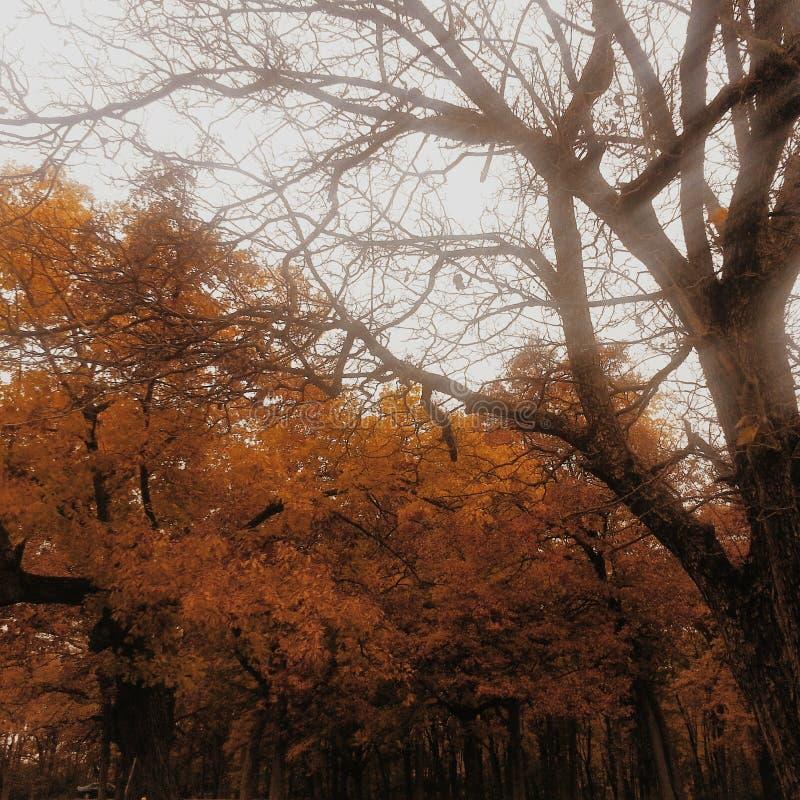 Dalingsbomen stock fotografie