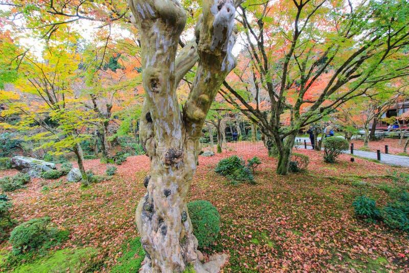 Dalingsgebladerte bij Enkoji-Tempel, Kyoto, Japan royalty-vrije stock afbeeldingen
