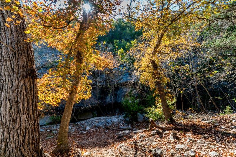 Dalingsgebladerte bij het Verloren Park van de Esdoornsstaat in Texas stock foto