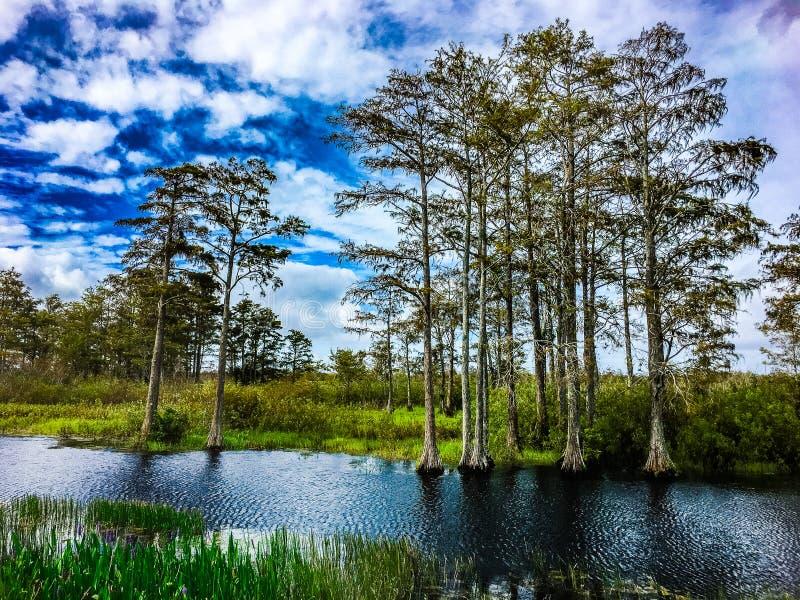 dalingsgebladerte in de moerassen royalty-vrije stock afbeelding