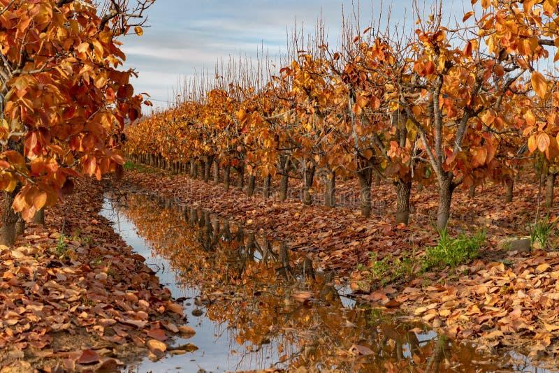 Dalingsgebladerte in een boomgaard royalty-vrije stock fotografie