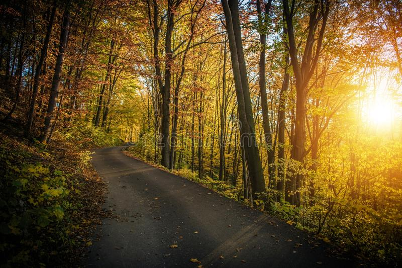 Dalingsgebladerte Forest Route royalty-vrije stock foto's