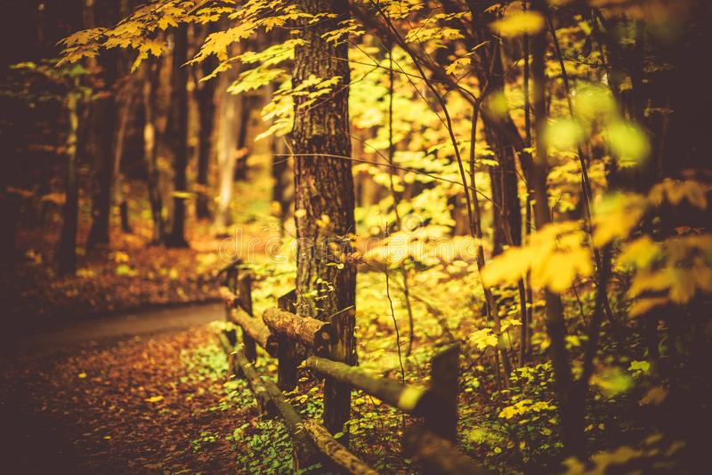 Dalingsgebladerte Forest Trail royalty-vrije stock afbeeldingen