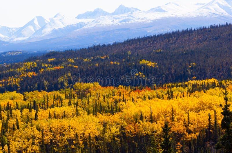 Dalingsgebladerte in het Nationale Park van Denali met berg op achtergrond royalty-vrije stock foto