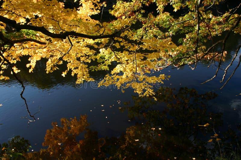 Dalingskleur: bezinning van boomtak en gele bladeren in water van stroom stock afbeeldingen