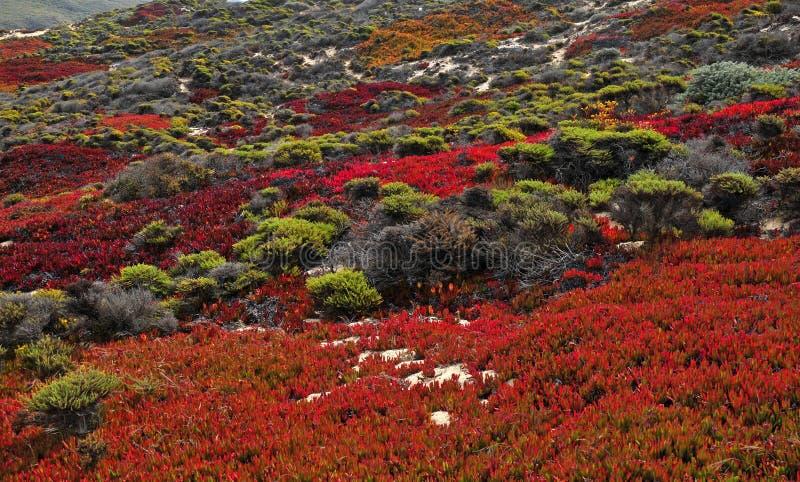 Dalingskleuren in Grote Sur Californië stock fotografie