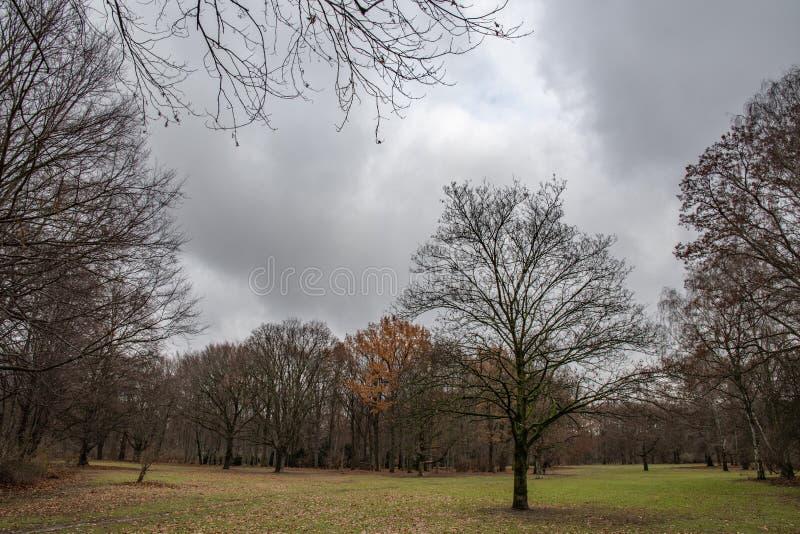 Dalingslandschap met naakte bomen en dramatische donkere bewolkte hemel Tiergartenpark van Berlin Germany De herfstmening aan par stock foto
