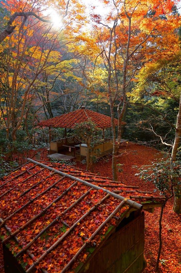 Dalingslandschap van een mooie tuin in Kyoto Japan, met mening van een houten as in het bos van vurige Japanse esdoornbomen royalty-vrije stock afbeelding