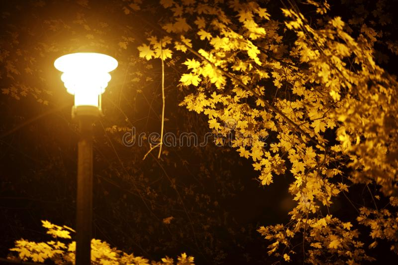 Dalingsnacht in Park stock afbeelding