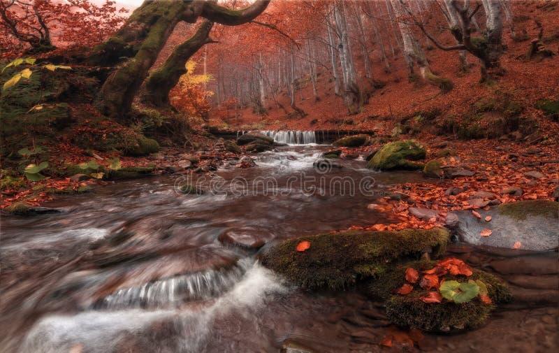 Dalingsstroom: De grote Rode Kleur van Autumn Beech Forest Landscape In met Mooie Bergkreek en Misty Grey Forest Enchanted Autum royalty-vrije stock foto's