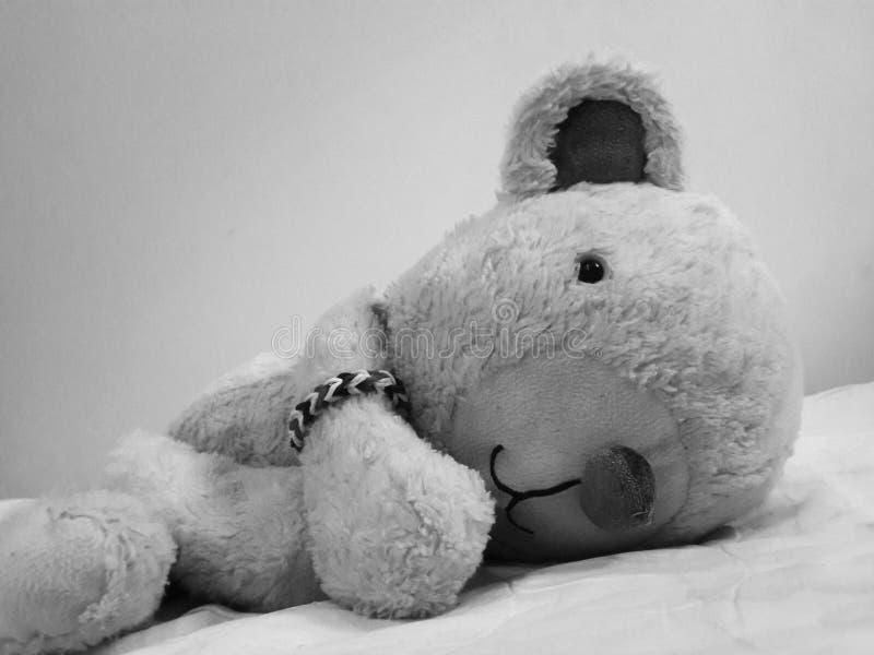 Dall del oso foto de archivo libre de regalías