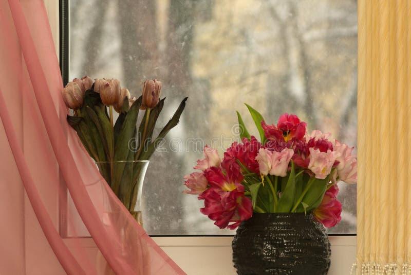 Dalla finestra nella stanza erano 2 vasi con i tulipani immagine stock libera da diritti