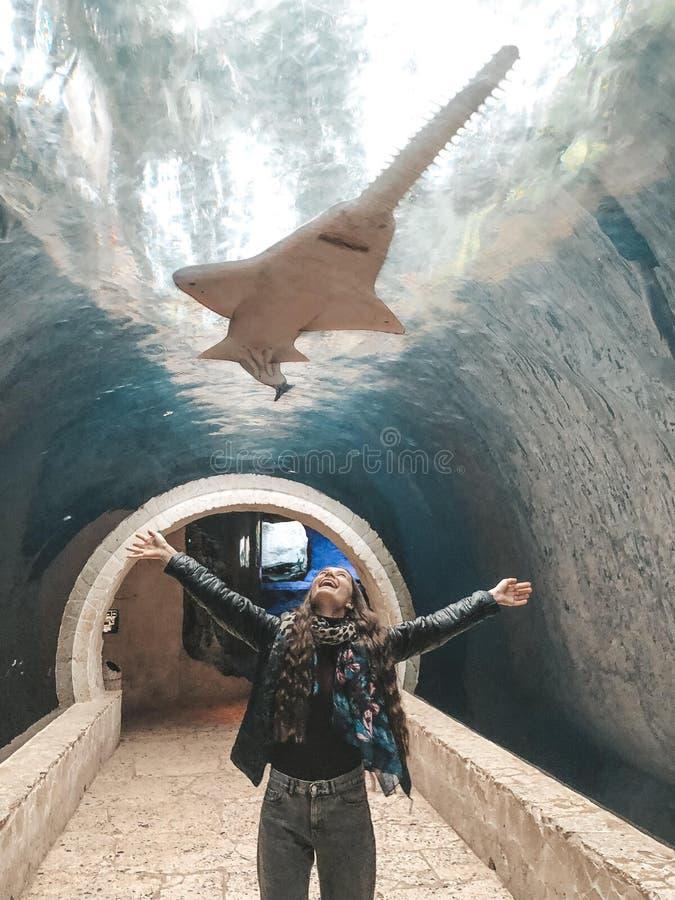 Dallas światowy akwarium, opieszałość zdjęcie stock