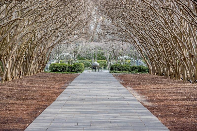 Dallas Arbitorium i ogród botaniczny w zimie fotografia royalty free