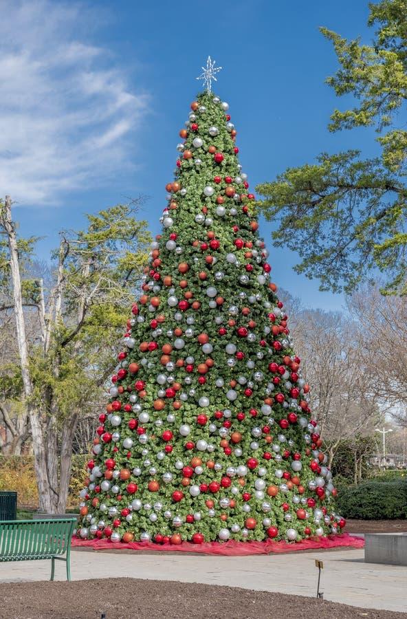 Dallas Arbitorium y jardín botánico en invierno imagen de archivo libre de regalías