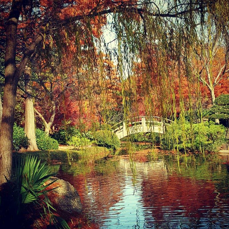 Dallas Botanical Gardens imágenes de archivo libres de regalías