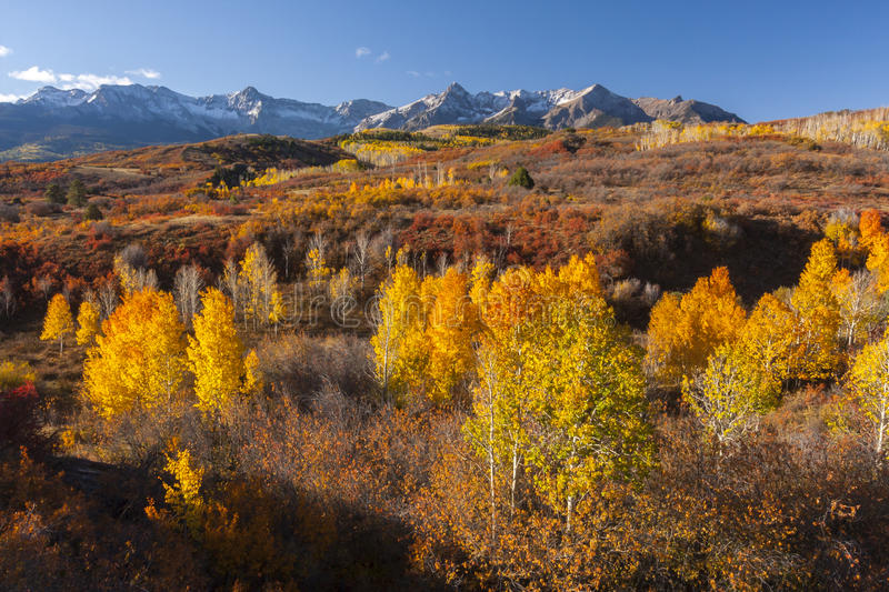 Dallas Divide. Autumn aspen trees on Dallas Divide in the Sneffel's Range, San Juan Mountains, Colorado stock photography