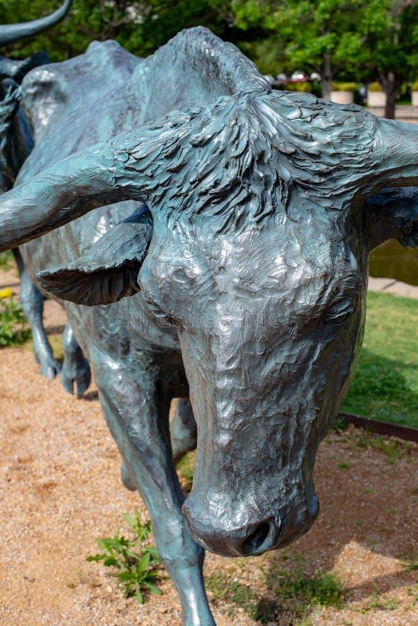 Dallas, Tejas - 7 de mayo de 2018: Vacas del vaquero y del fonolocalizador de bocinas grandes con ganado en el fondo, como parte  fotografía de archivo
