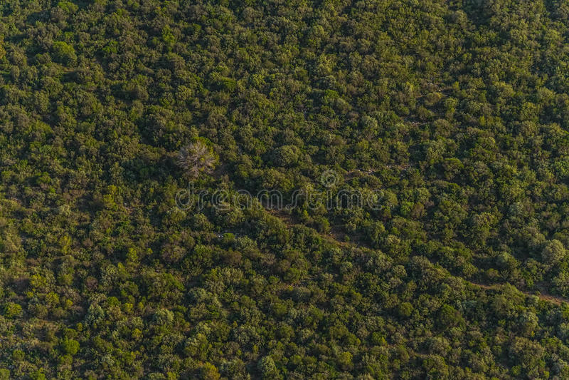 Dalmatia antena zdjęcia royalty free