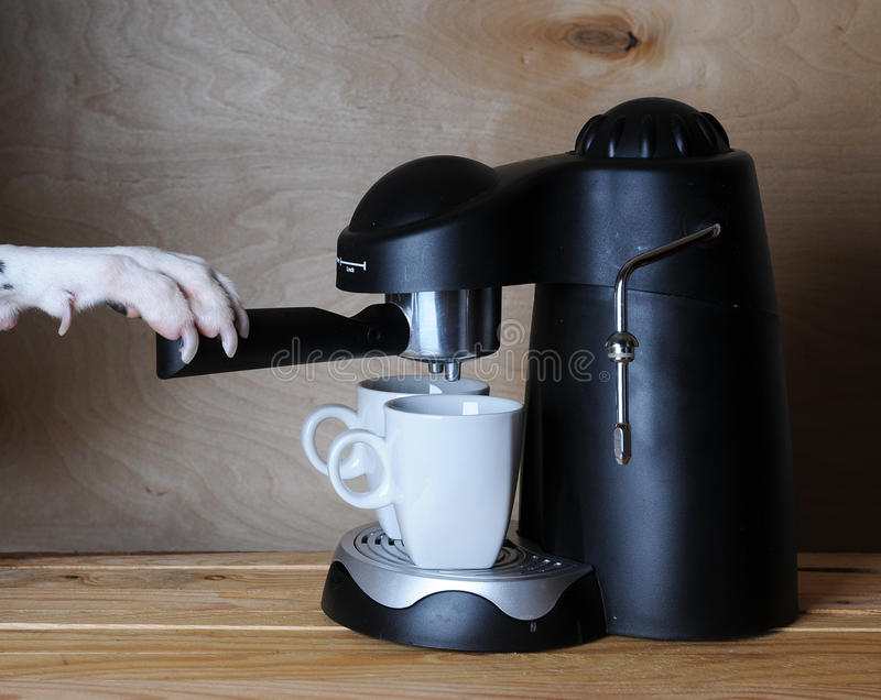 Dalmatian barista prepares coffee. Dog& x27;s paw on the handle of the espresso machine. stock photos