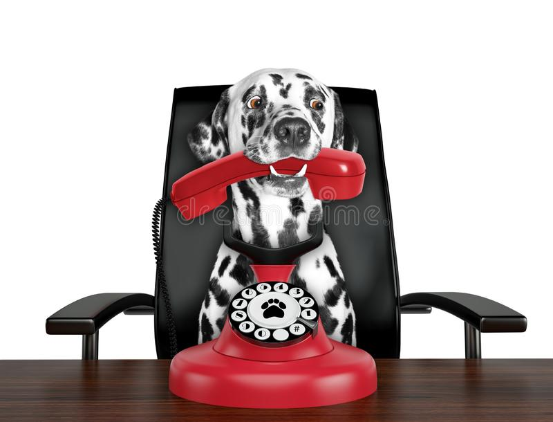 Dalmatian dog is talking by red old dial telephone. Isolated on white. Background stock images