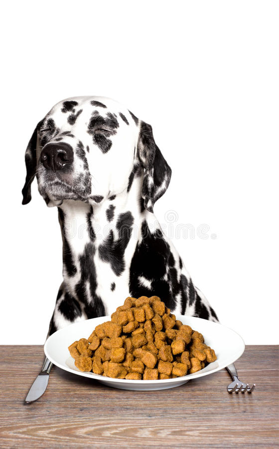 Free Dalmatian Is Not Hungry Royalty Free Stock Photography - 67091007