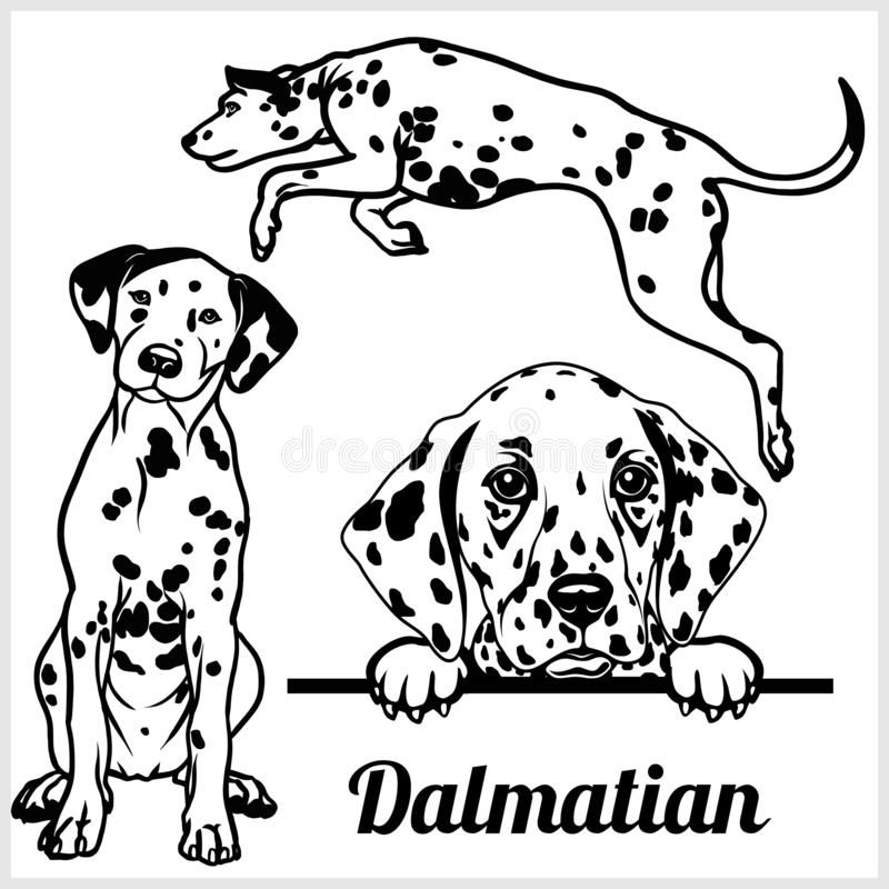Dalmatian - vector illustration for t-shirt, logo and template badges. In monochrome style royalty free illustration